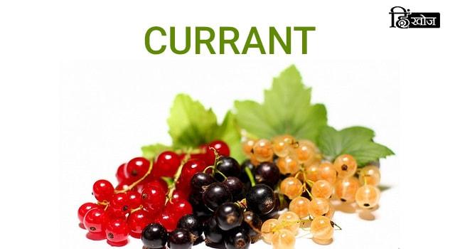 CURRANT-min